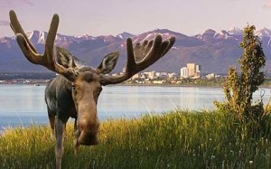 moose-anchorage_1741371c